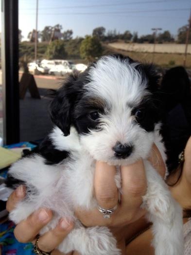 Bob & Aimee's Dog, Wookie