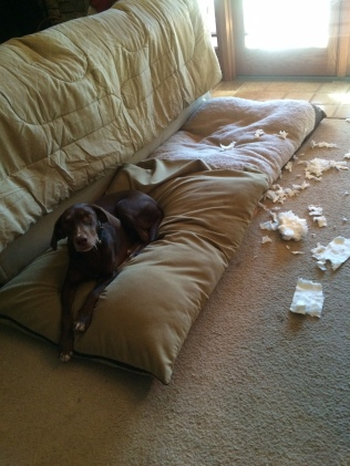 "Molly - ""It wasn't me."""