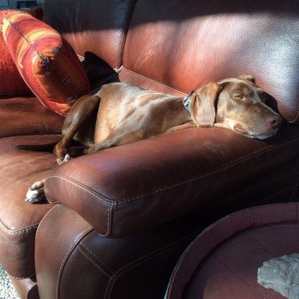 Molly - crashed on the outside couch