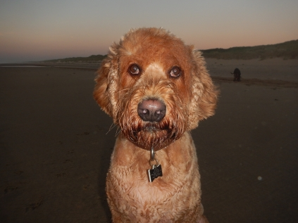 Stan at the Beach